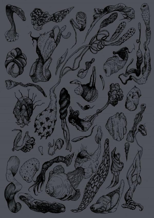 Cellulis Affectus (dark grey)
